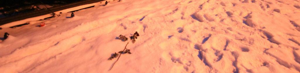 Winter in Auschwitz and Birkenau – A photo blog