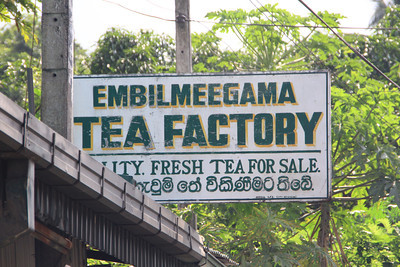 All about tea in Sri Lanka … no Lipton for me